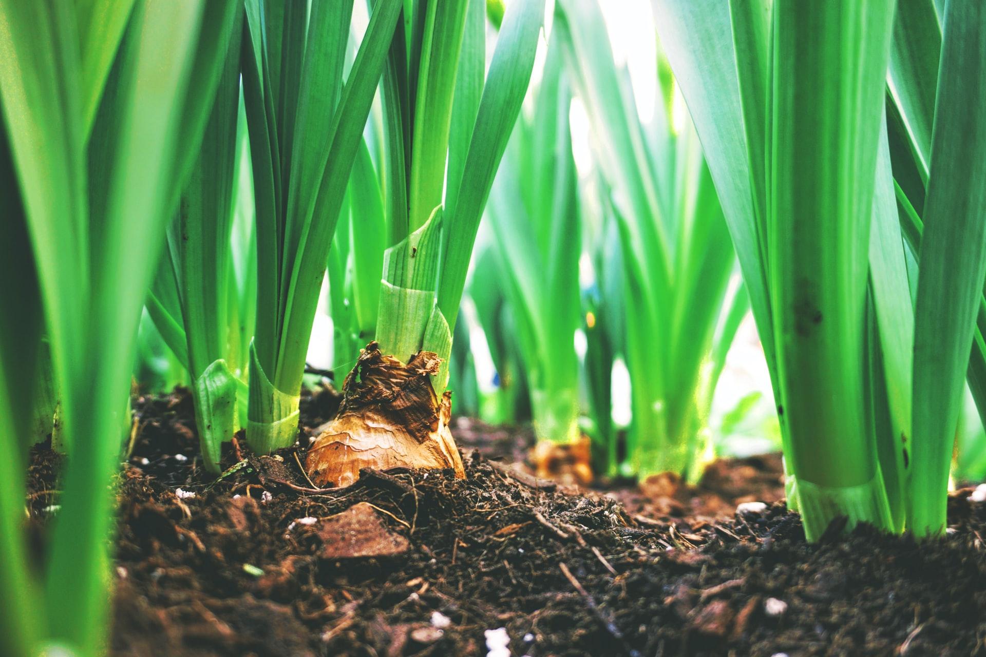 Plantas con compost